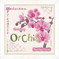 Orchidée. Séduction, spiritualité, fertilité, perfection.