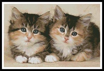 Mignons chatons