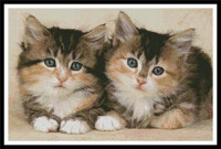 Mignons chatons