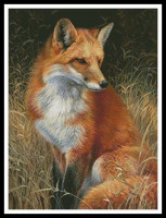 Tableau de renard roux