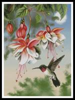 Fushias et oiseau mouche