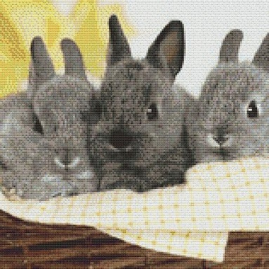 Mignons lapins gris