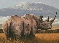 A Amboseli