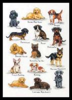 Sampler de chiens