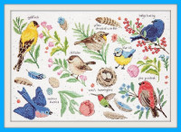 Etude d'oiseaux