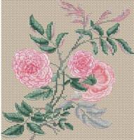 Rose gracile