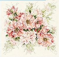 Roses de jardin