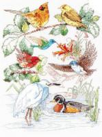 Sampler oiseau