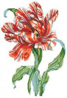 Tulipe perroquet striée