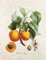Abricot-pêche