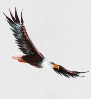 Pièce à broder et à coudre aigle