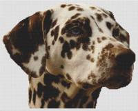 Dalmatien brun